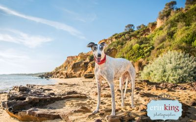 Pet Photography Image Editing Videos