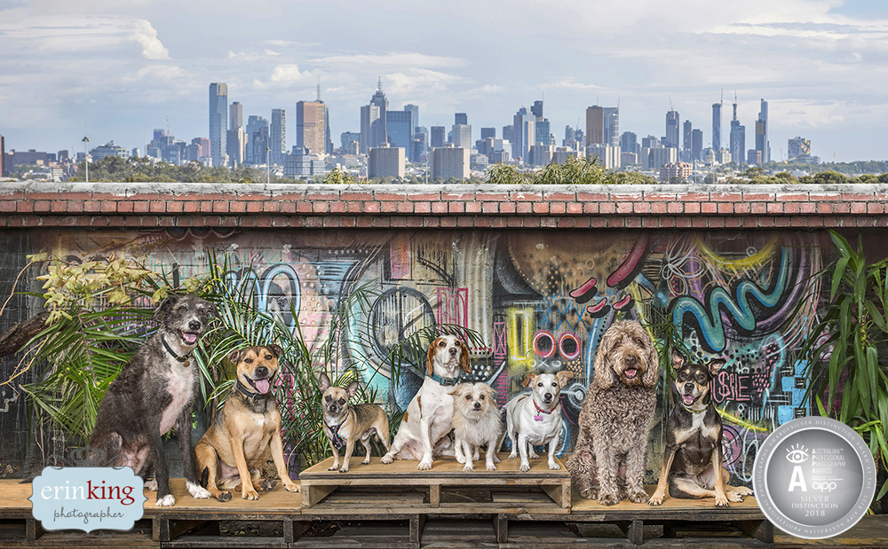 Melbourne dogs in the city