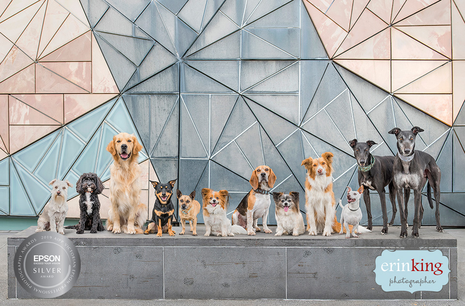 Melbourne rescue dogs in the city