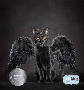 Black devil cat
