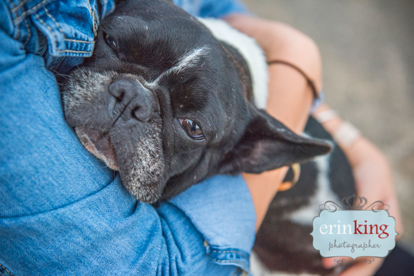 Melbourne rescue dog French Bulldog
