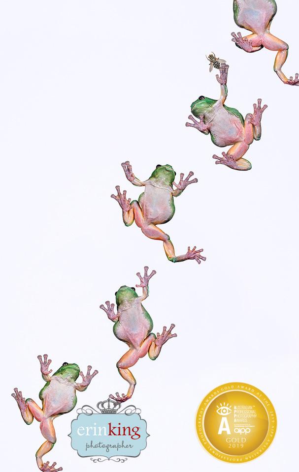 green tree frog award winning photography