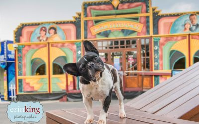 Heartwarming Rescue Stories of Melbourne Dogs – Meika the French Bulldog