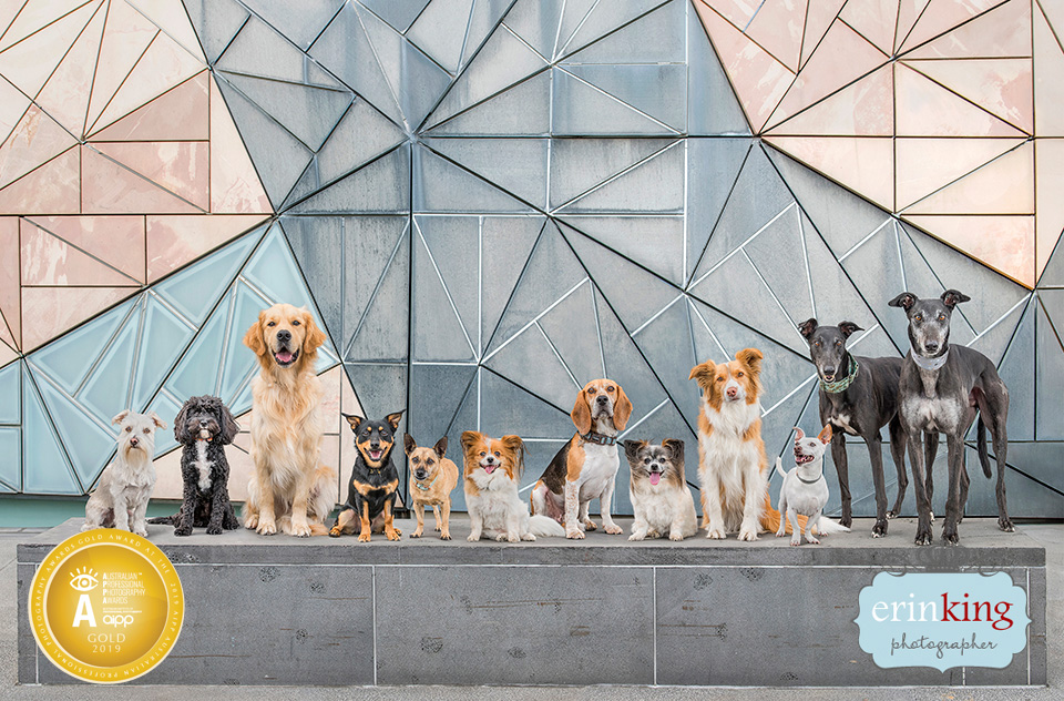 Melbourne rescue dogs federation square