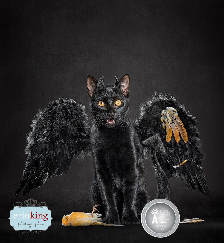devil cat award winning photography