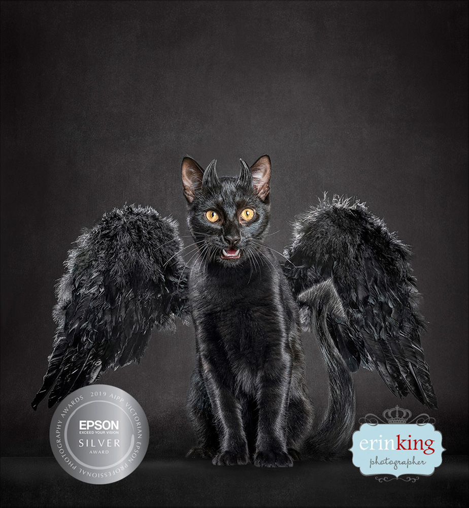 award winning pet photography Australian Professional Photography Awards