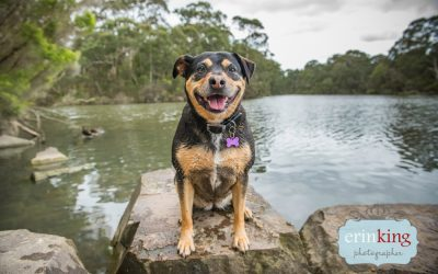 Heartwarming Rescue Stories of Melbourne Dogs – Lucy the Staffordshire Bull Terrier cross