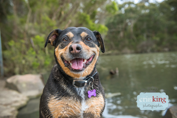 smiling staffy face