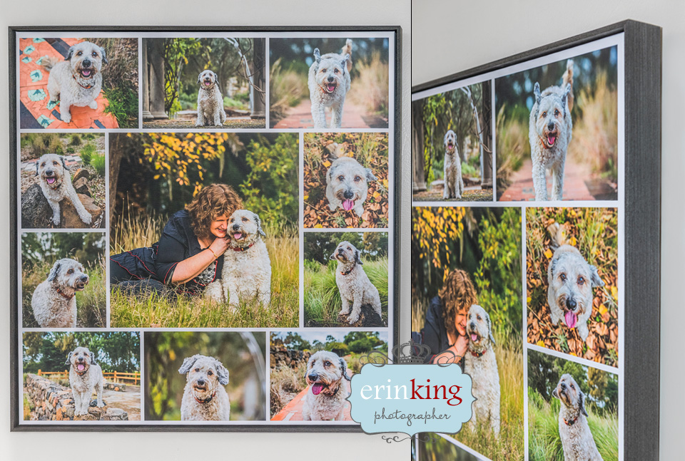 Pet Photography Canvas Collage