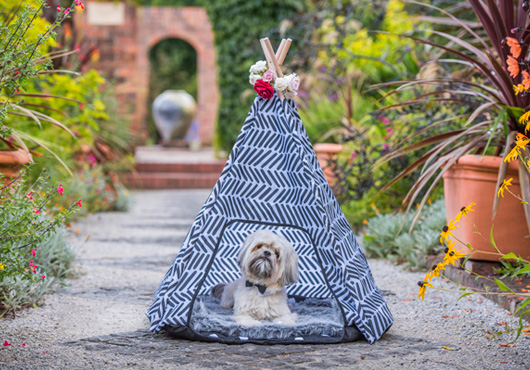 dog in teepee