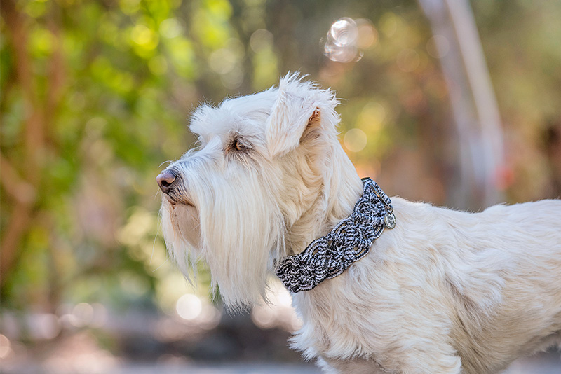 boho pet dog collar photography