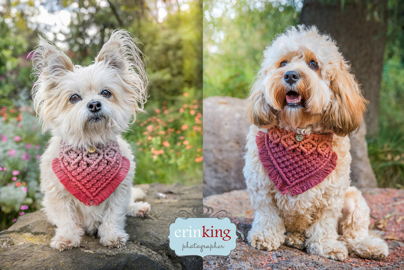 boho pet dog bandanas dog photography